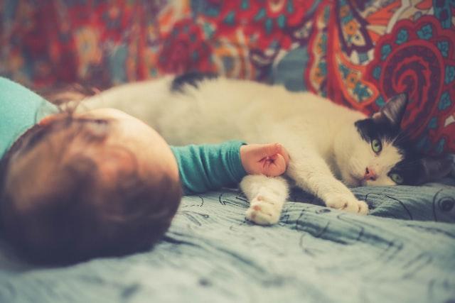 Mačke i bebe