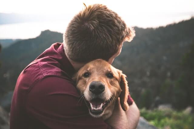 Pitanja i dileme koje imaju vlasnici pasa