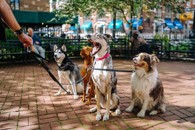Razne vrste pasa
