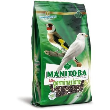 Manitoba High Germination 2.5kg